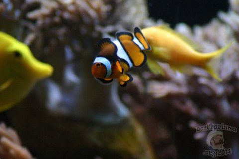 DonCharisma.org-Nemo-Fish
